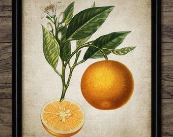 Orange Print - Orange Illustration - Orange Art - Orange Fruit - Digital Art - Printable Art - Single Print #205 - INSTANT DOWNLOAD