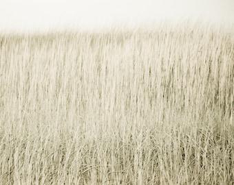Dune Grass:  Cape Cod print on bamboo wood panel