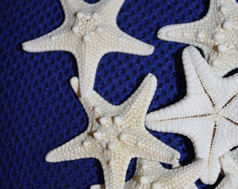 30) pcs, ARMORED STARFISH, free shipping, top quality craft ready knobby starfish, fine looking armored starfish, shell crafts, #65