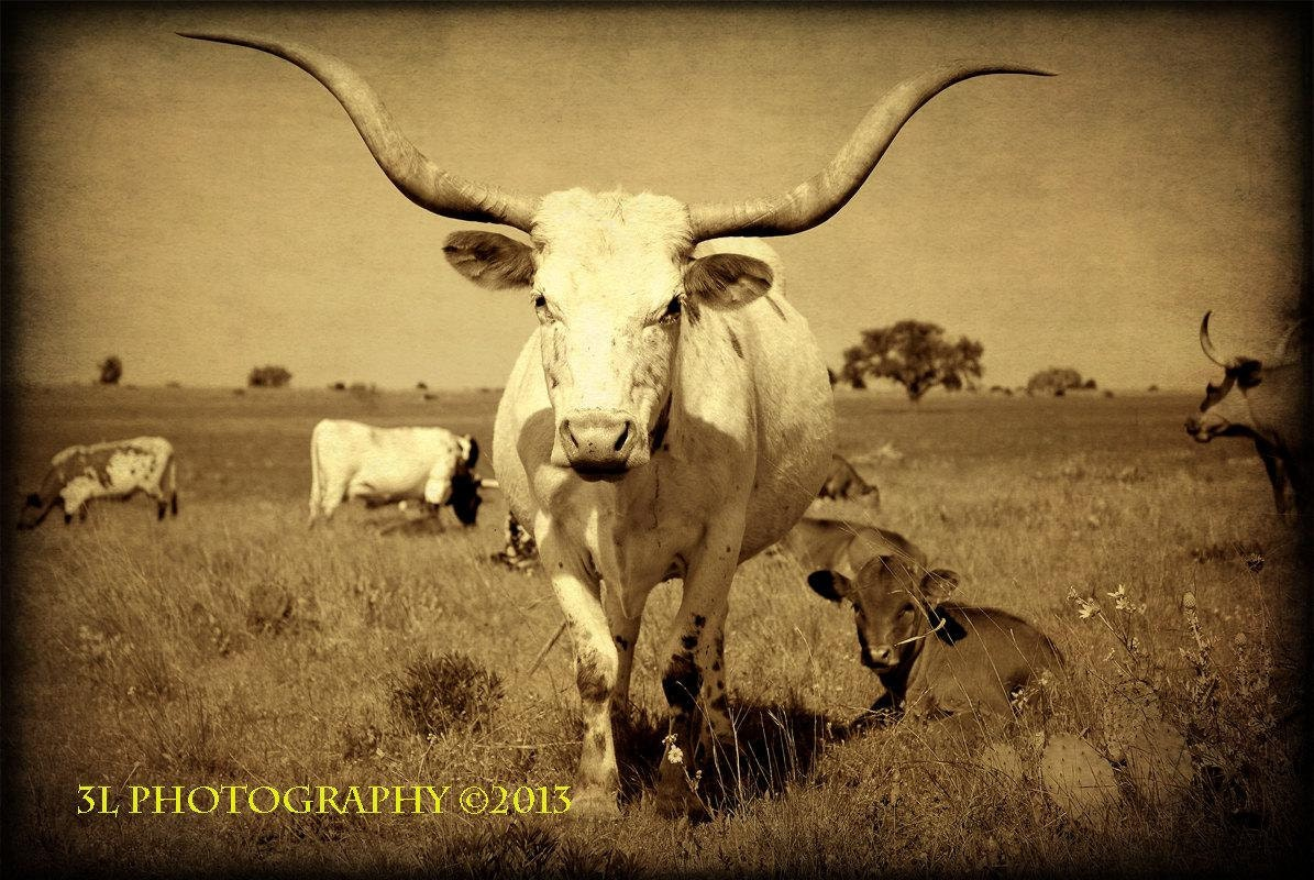 Famous Texas Longhorn Wall Art Pictures Inspiration - The Wall Art ...
