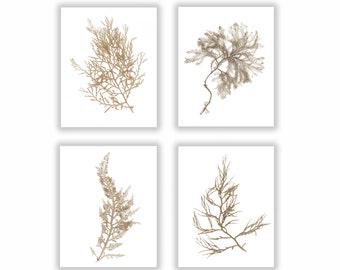 Natural Sepia Warm Brown Botanical Seaweed Print Set, Wall Decor, Set of Four,  Seaweed Prints, Coastal Living