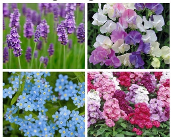 Save 50%! FRAGRANT GARDEN SEED Kit - 4 Types of Scented Flowers -Lavender,Sweet Pea,Cynoglossum,Matthiola/Evening Scentec Stock -EcoFriendly