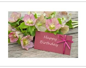 Helleborus - Hellebore - Birthday Greetings