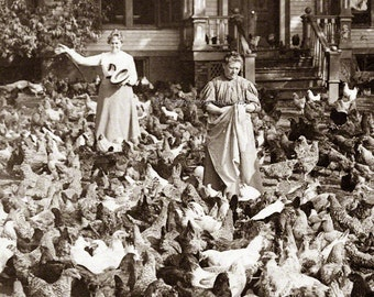 Chicken Print - Chickens Fill Yard in NJ Women Surrounded