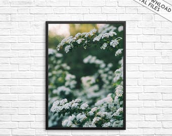 Bloom print, Floral print, in bloom photography, Blooming wall art, Flowers wall print, Botanical print, Nature art print, Modern home decor