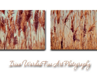 Rustic wall art canvas set of 2 canvas wraps, aqua brown rust copper bronze nature wall art beach grass photography, office bedroom decor