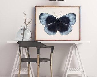 Blue Butterfly Photograph, Large Wall Art Print, Nature Photography, Butterfly Art, Animal Art Print, Wall Art, Natural History Art Print