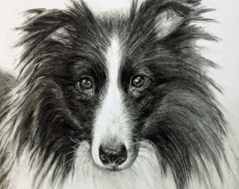 """Custom Dog Drawing, From Picture, custom pet drawing,  charcoal drawing,  pet sketch, personalized art, Border Collie, pet memorial, 8x10"""""""
