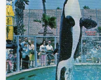 Shamu Orca Whale High Jump Trick Vintage Sea World Postcard #1 1966