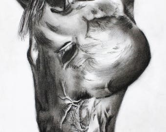 Horse Head - Original Charcoal Drawing Sketch