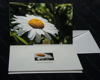 Blank photo greeting cards + envelope 4.5 x 7 - Marie-Eve LaBadie