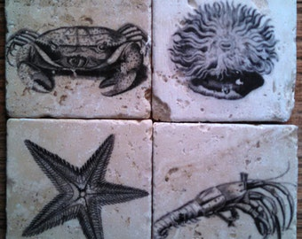 Crustacean Marble Tile Coasters - Set of 4
