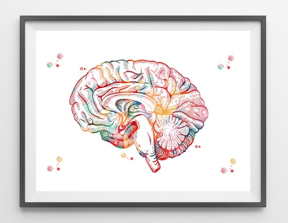 Brain Anatomy Cross Section Watercolor Print Human Brain