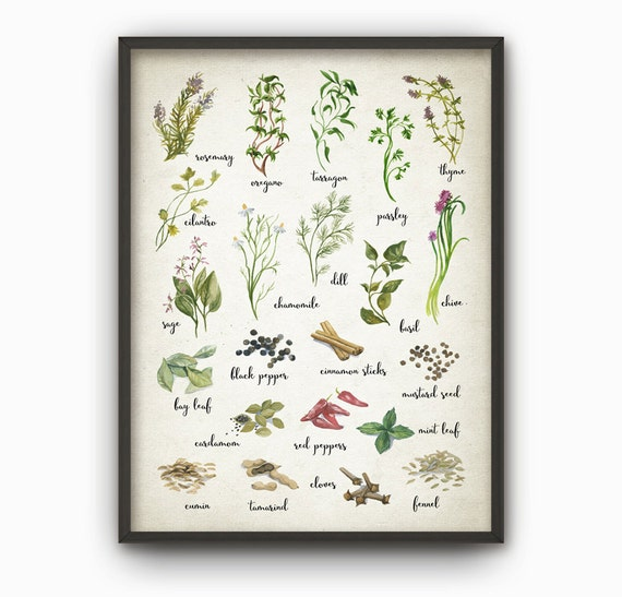 Kräuter und Gewürze Aquarell Küche Wand Kunst Poster Print