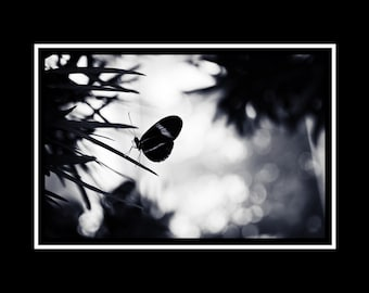 Gothic Butterfly Photograph, Butterfly Silhouette Photo, Black & Blue Horizontal Wall Art, Nature Photography, Fine Art Photograph