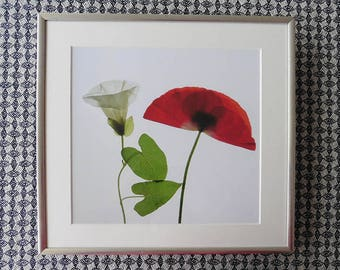 Bindweed and Poppy