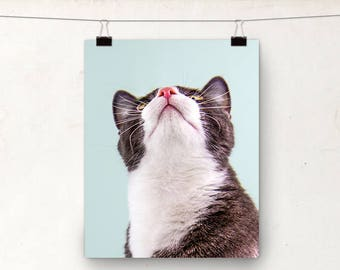 Cat Photograph, Animal Photography, Cat Whiskers, Nursery Art, Blue