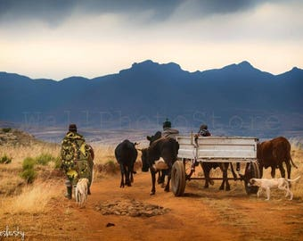 Lesotho Photography, Basotho Farmers in traditional Blankets, Cart, Dogs, Mountains, South Africa, Fine Art Photography, African Print Art
