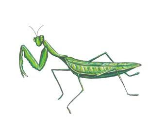 Praying Mantis Notecard of original watercolor