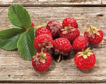 Windowsill Strawberry Garden Kit