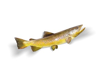 Brown Trout Decal, Brown Trout Sticker, Brown Trout