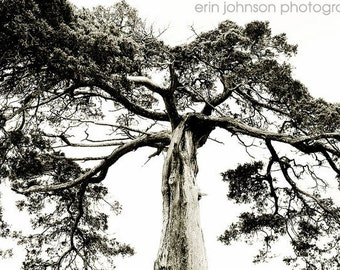 landscape photography tree photography black and white fine art nature decor  Crooked Tree