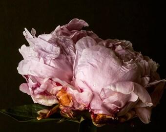 Dark Botanical studio No. 005