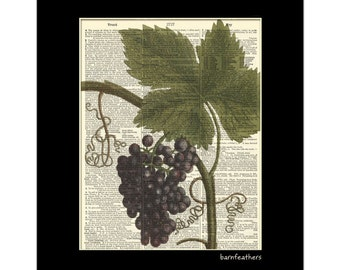 Grapes - 1700s Illustration - Dictionary Art Print - Home Decor Print No. P196