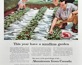 1956 Aluminum Foil from Canada Ad - 1950s Family Growing Strawberries in their Garden - Nostalgic Ads
