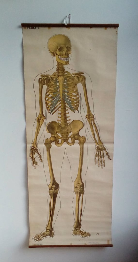 Skelett-Diagramm - große Anatomie Poster - Axial Skelett - medizinische Wandkunst - Medizin Poster - Wandbehang - Wandposter