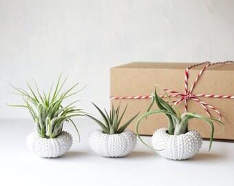 White Air Plant Jellyfish Friend Gifts, Air Plant, Best Friend Birthday, Housewarming Gift Boyfriend Gift, Grandma Gift, Mom Gift, Aunt Gift