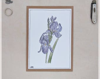 Iris ~ Art Print Gift Card from Original Watercolour & Ink Illustration