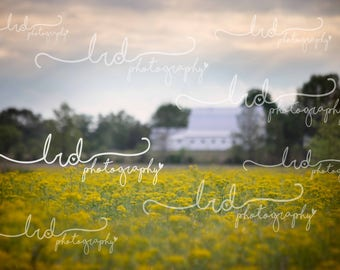Digital Backdrop/Yellow flower field with a white barn/family/prop