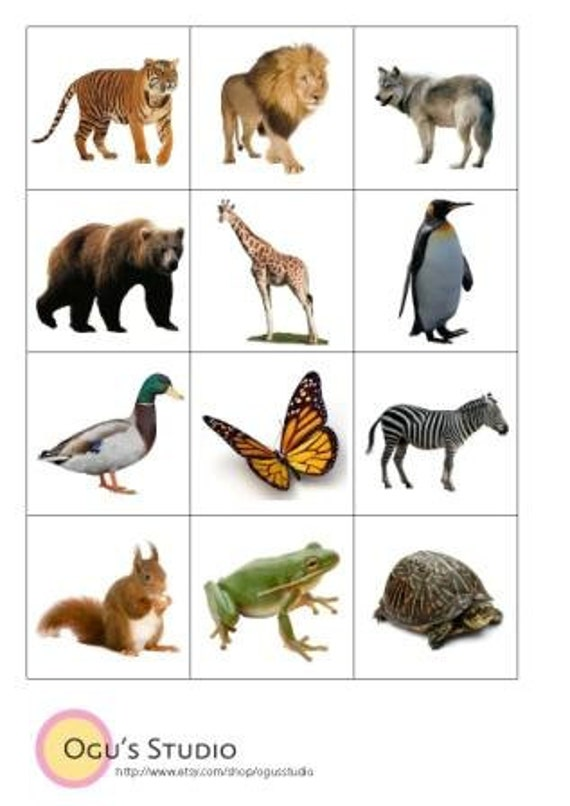 Persnickety image with regard to animal cards printable