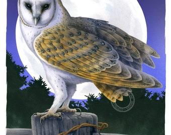 Bird illustration - Barn Owl Moon - bird art, print of original artwork