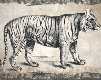 Digital download vintage look tiger