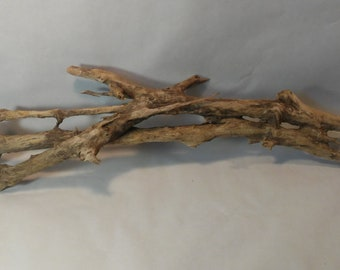 Taxidermy Driftwood, Rough Gnarled Tree Root, Wall Hanging