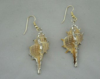 Sea shell with silver earrings