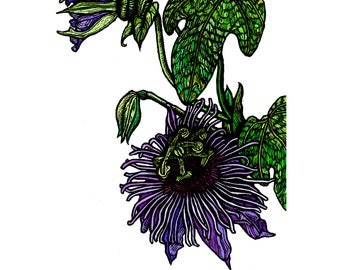 Wall Art, Giclee Signed Art Print - A5 - Passion Flower