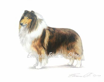 Rough Collie Dog - Archival Quality Fine Art Print - AKC Best in Show Champion - Breed Standard - Herding Group - Original Art Print