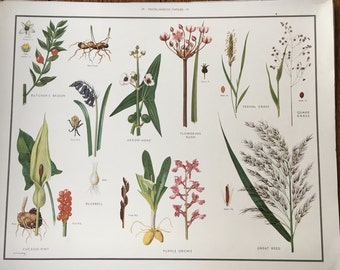 VINTAGE School Poster, Misc 6, BLUEBELLS, Orchids, Bulbs, Educational Print, Nature Study, Wildflowers, Flowers