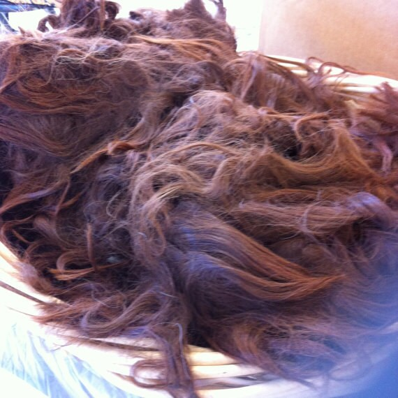 One lb. pound Raw Alpaca Suri fiber fleece