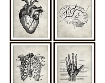 Vintage Heart Anatomy Art Print, Rib Cage, Brain, Hand Skeletal, Human Anatomy Set of Four 5x7 8X10 11x14 Medical Science Doctor Medical Art