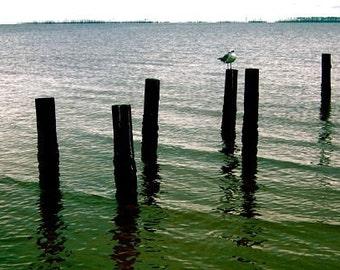 Seagull Photograph, Gulf Coast Photo, Mississippi Coast, Blue Green Wall Art, Ocean Springs Photo, Coastal Bird Photo, Seagull Wall Art