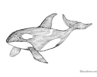 Orca - Art Print