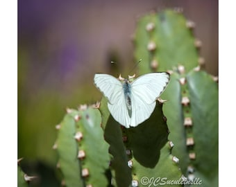 Butterfly on Cactus photo for instant download