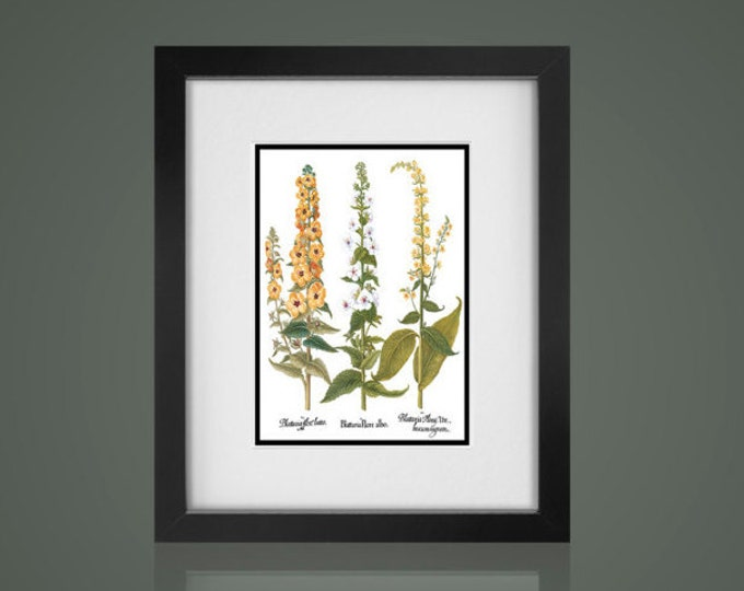 BOTANICAL PRINT - Matted and Framed - Free Shipping - Yellow Floral Print - Black Or  White Frames - In 4 Sizes - Cottage Chic