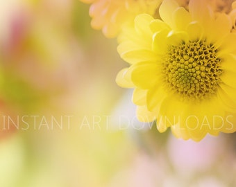 Digital Art, Instant Downloads, Yellow daisy, Digital flower, Yellow art, Digital Download, Flower art, Large Art Downloads, Stock Photos