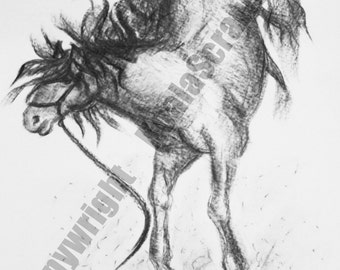 Mounted A4 print of original charcoal expression of horse  attitudes from the 'Equus' range - Titled 'Bring It On'