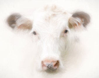 "Buttercup cow print  24x36"""